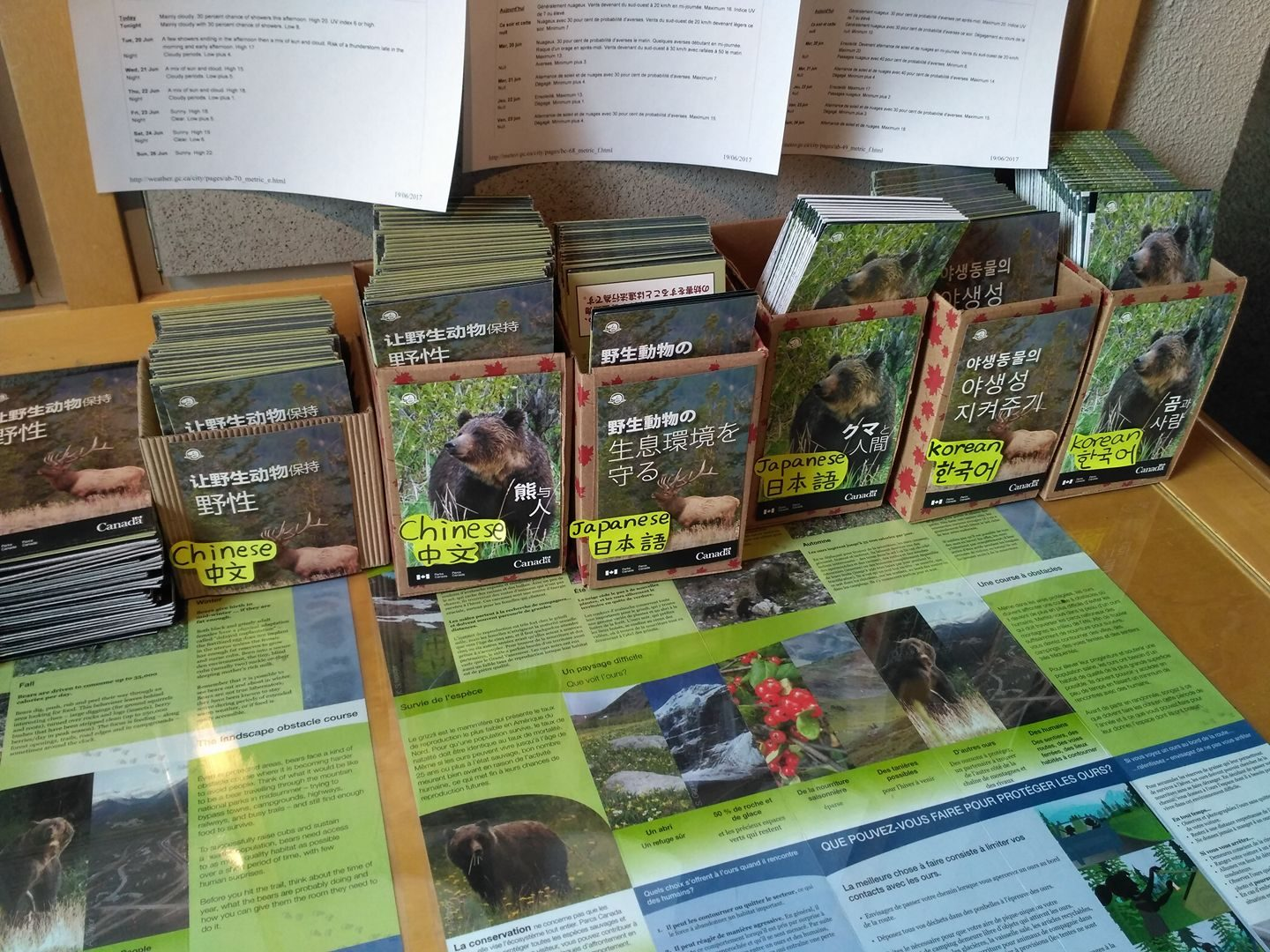Bear safety pamphlet